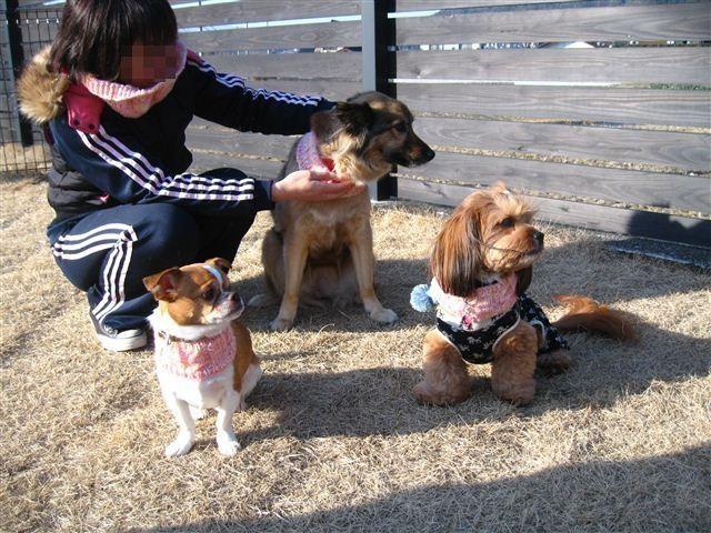 f:id:yasukazu01:20120212155744j:image
