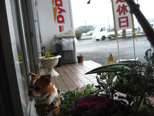 f:id:yasukazu01:20120213163455j:image
