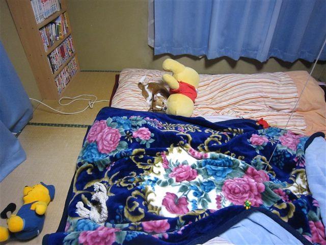 f:id:yasukazu01:20120215224003j:image