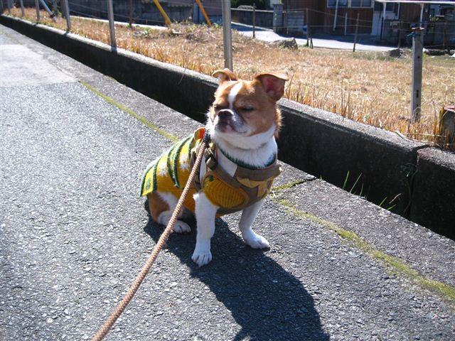 f:id:yasukazu01:20120220121600j:image