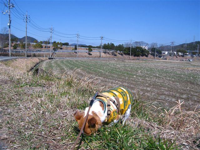 f:id:yasukazu01:20120220123407j:image