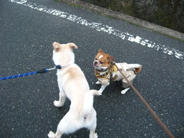 f:id:yasukazu01:20120304073942j:image