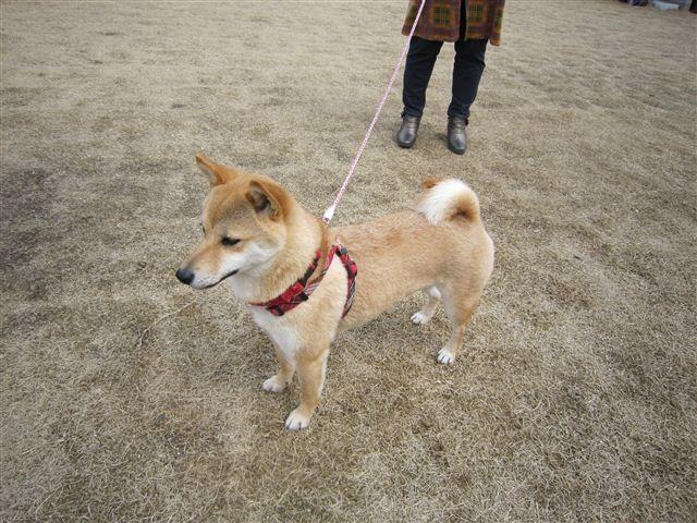 f:id:yasukazu01:20120317140159j:image