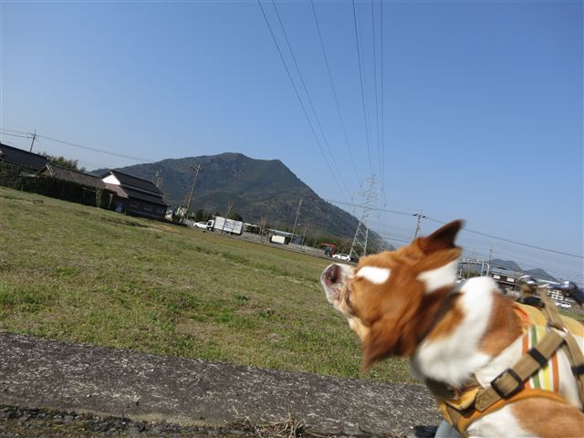 f:id:yasukazu01:20120327091333j:image
