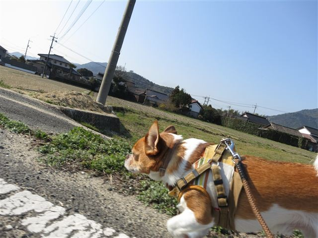f:id:yasukazu01:20120327091343j:image