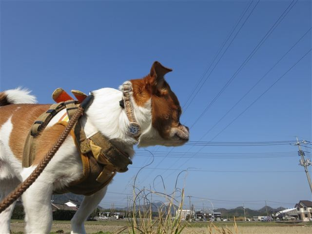 f:id:yasukazu01:20120327091447j:image