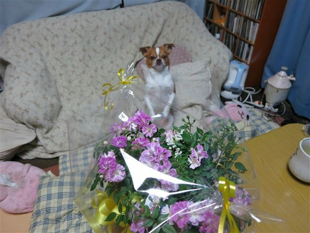 f:id:yasukazu01:20120327195003j:image