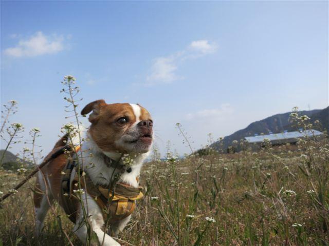 f:id:yasukazu01:20120330091949j:image
