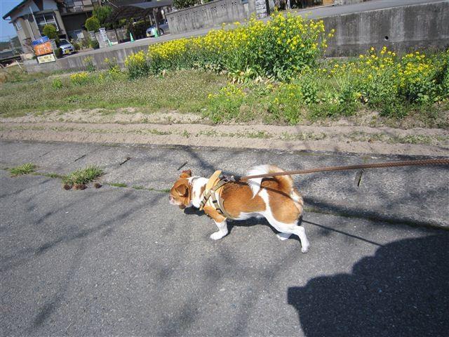 f:id:yasukazu01:20120401142923j:image