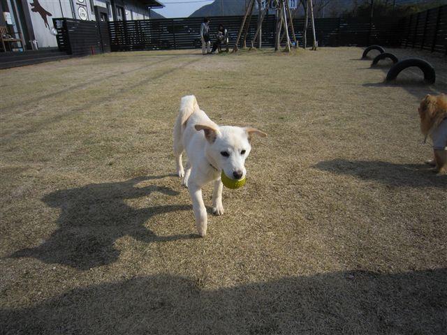f:id:yasukazu01:20120404155844j:image