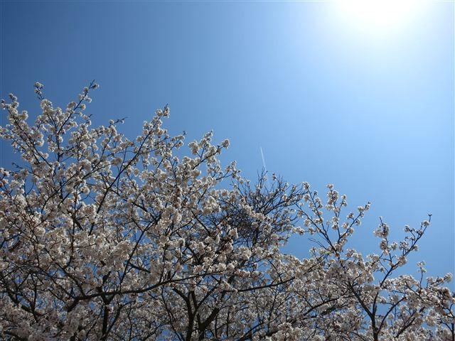 f:id:yasukazu01:20120408114306j:image