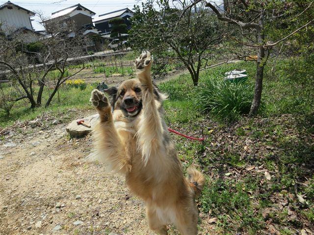 f:id:yasukazu01:20120408115935j:image