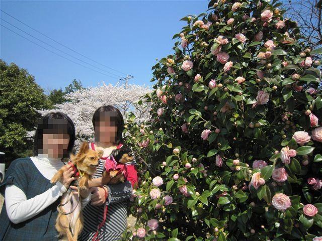 f:id:yasukazu01:20120408141828j:image