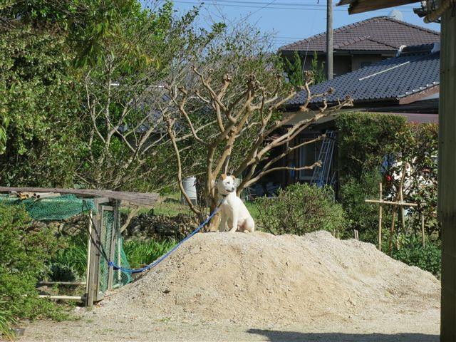 f:id:yasukazu01:20120414152246j:image