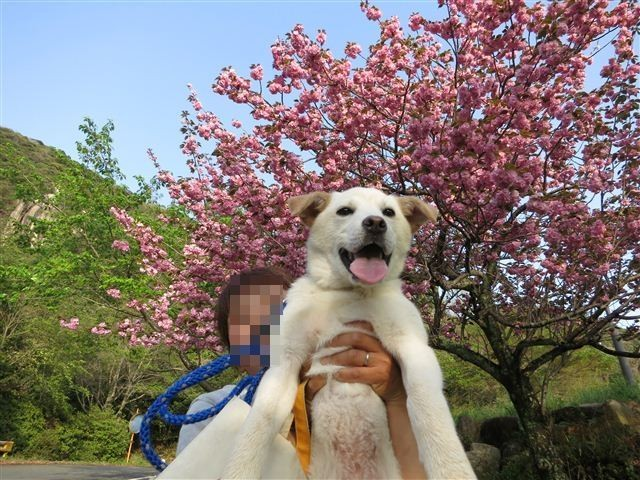 f:id:yasukazu01:20120422173652j:image
