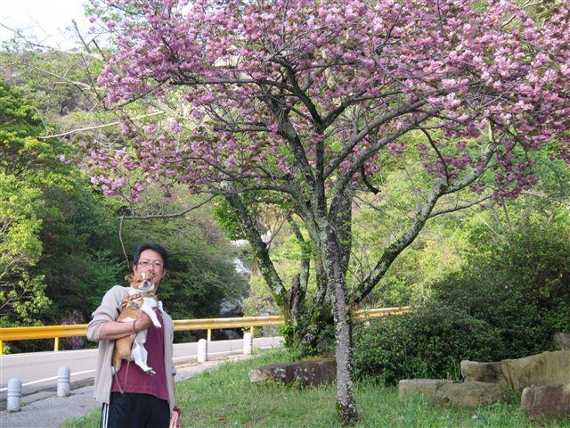 f:id:yasukazu01:20120422173704j:image
