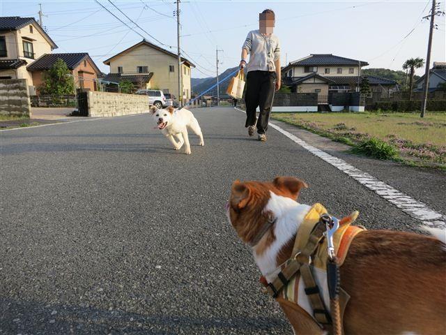 f:id:yasukazu01:20120422175953j:image