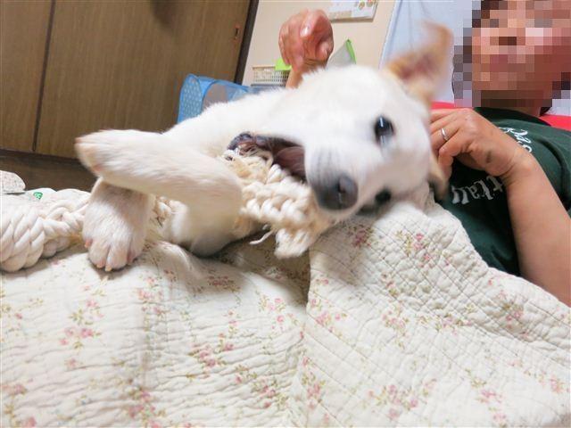 f:id:yasukazu01:20120502212835j:image