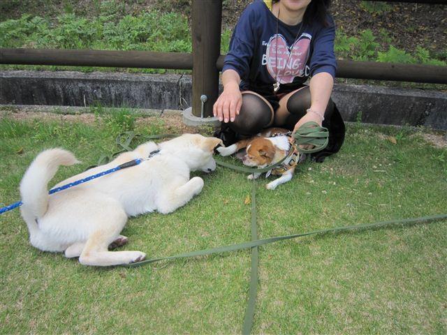 f:id:yasukazu01:20120504141636j:image