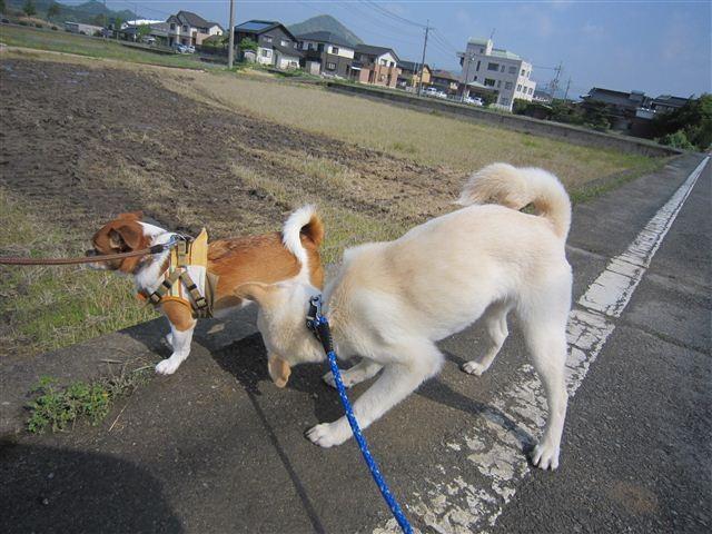 f:id:yasukazu01:20120506090223j:image