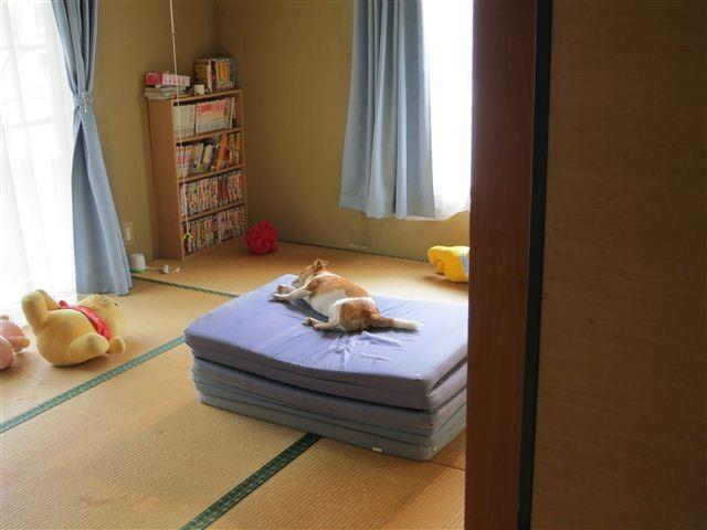 f:id:yasukazu01:20120529163613j:image