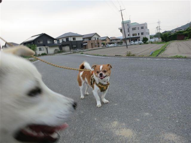 f:id:yasukazu01:20120529183330j:image