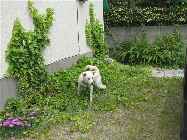 f:id:yasukazu01:20120530110253j:image