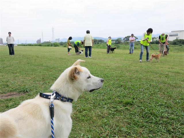 f:id:yasukazu01:20120603094236j:image
