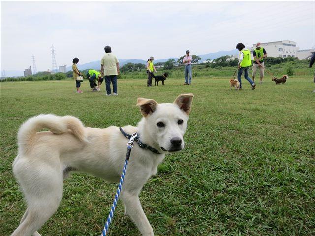 f:id:yasukazu01:20120603094243j:image