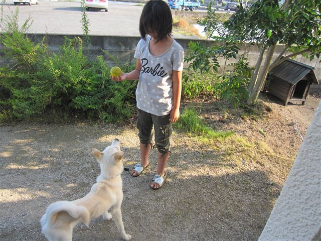 f:id:yasukazu01:20120603170722j:image