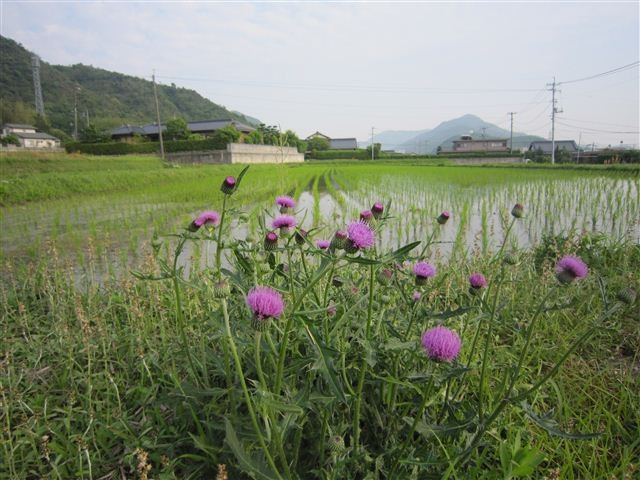 f:id:yasukazu01:20120607171340j:image