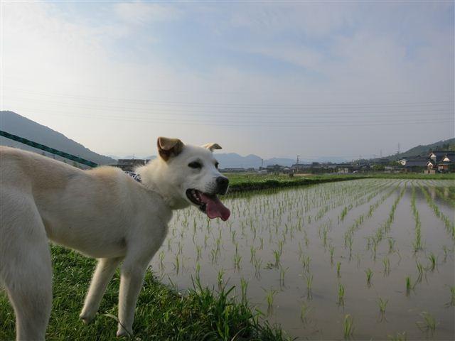 f:id:yasukazu01:20120607171357j:image