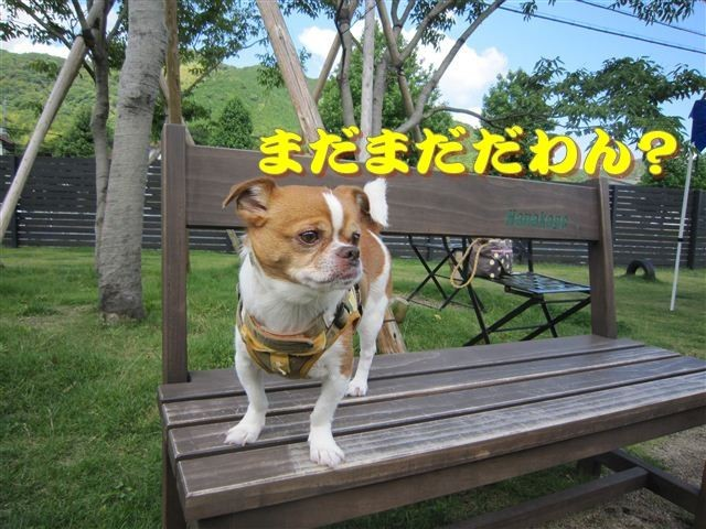 f:id:yasukazu01:20120610093421j:image