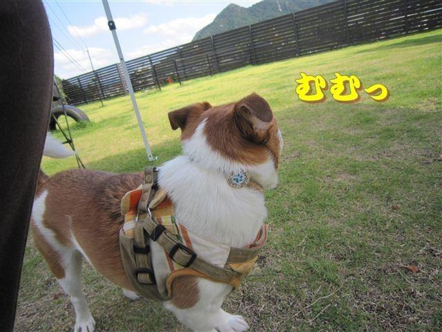 f:id:yasukazu01:20120610093903j:image