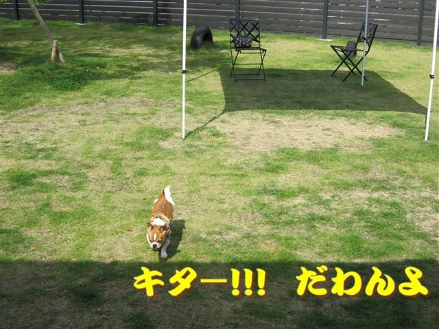 f:id:yasukazu01:20120610094336j:image