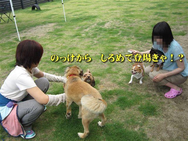 f:id:yasukazu01:20120610100832j:image
