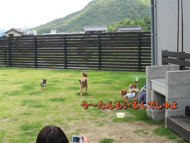 f:id:yasukazu01:20120610100903j:image