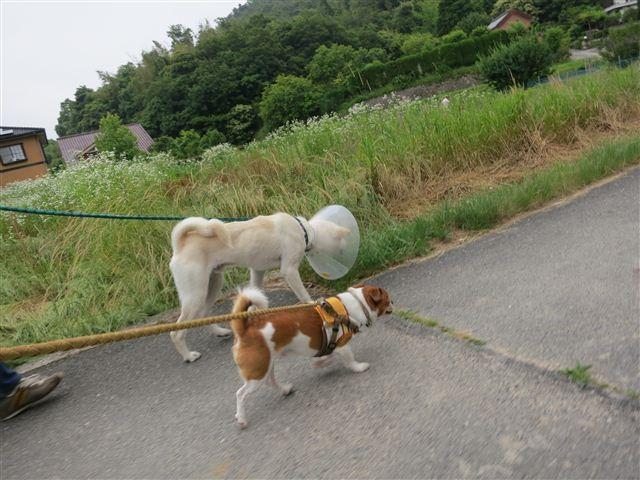 f:id:yasukazu01:20120612163605j:image