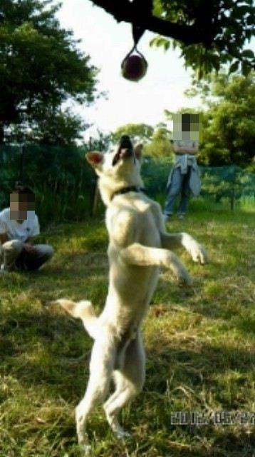 f:id:yasukazu01:20120618212000j:image