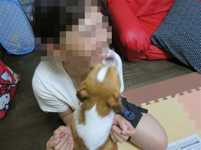 f:id:yasukazu01:20120619185120j:image