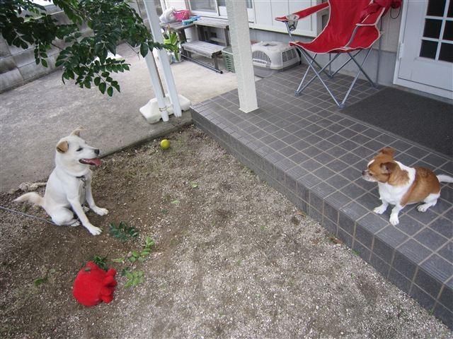 f:id:yasukazu01:20120625165106j:image
