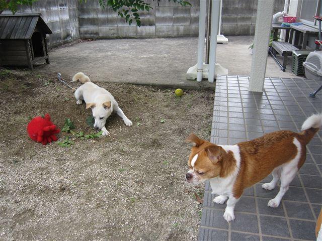 f:id:yasukazu01:20120625165144j:image