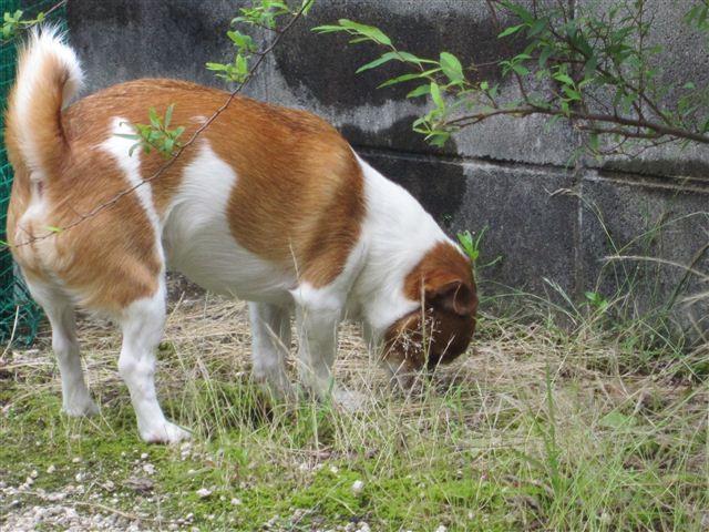 f:id:yasukazu01:20120625165357j:image