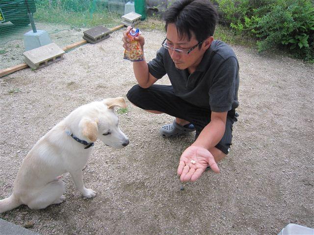 f:id:yasukazu01:20120626154133j:image