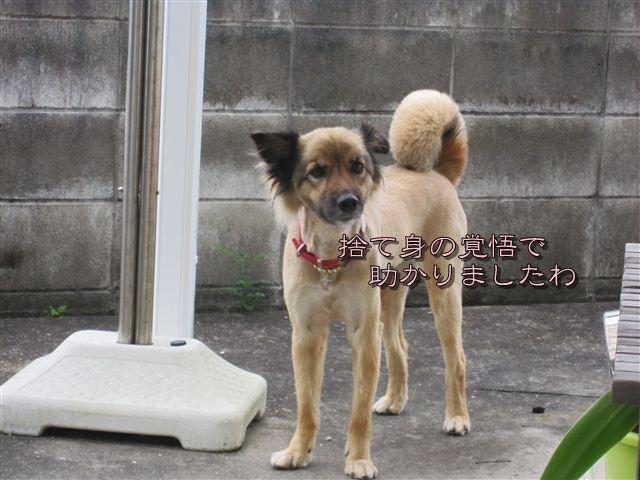 f:id:yasukazu01:20120707161842j:image