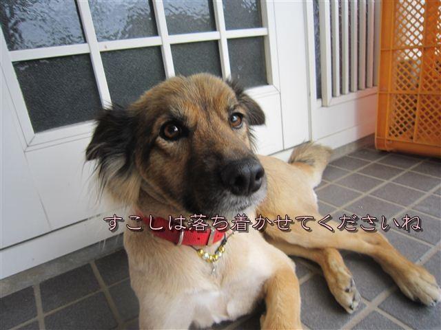 f:id:yasukazu01:20120707163148j:image