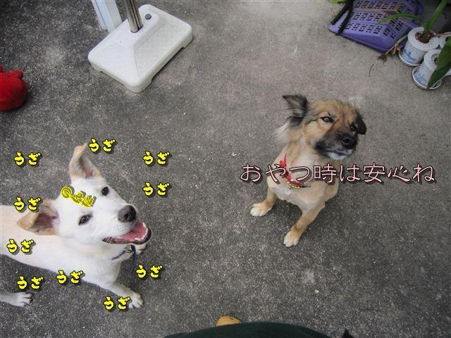 f:id:yasukazu01:20120707164127j:image