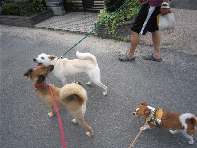 f:id:yasukazu01:20120707175912j:image
