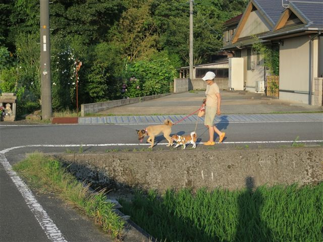 f:id:yasukazu01:20120708182236j:image