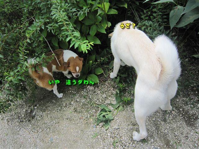 f:id:yasukazu01:20120719122037j:image